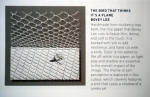 bird-plane-page