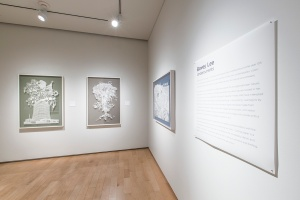 Bovey Lee: Undercurrents, solo exhibition, Nevada Museum of Art, 2012