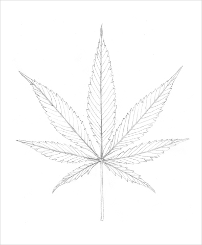 Bovey Lee, Cannabis Sativa, pencil on paper, for The New York Times Magazine, June 30 issue, 2013